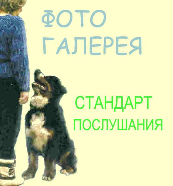 ВЫПОЛНЕНИЕ КОМАНД В КАРТИНКАХ